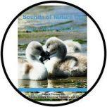 Kom tot rust met de natuur - CD