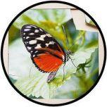 Puzzel Vlinder - hout 16 delig